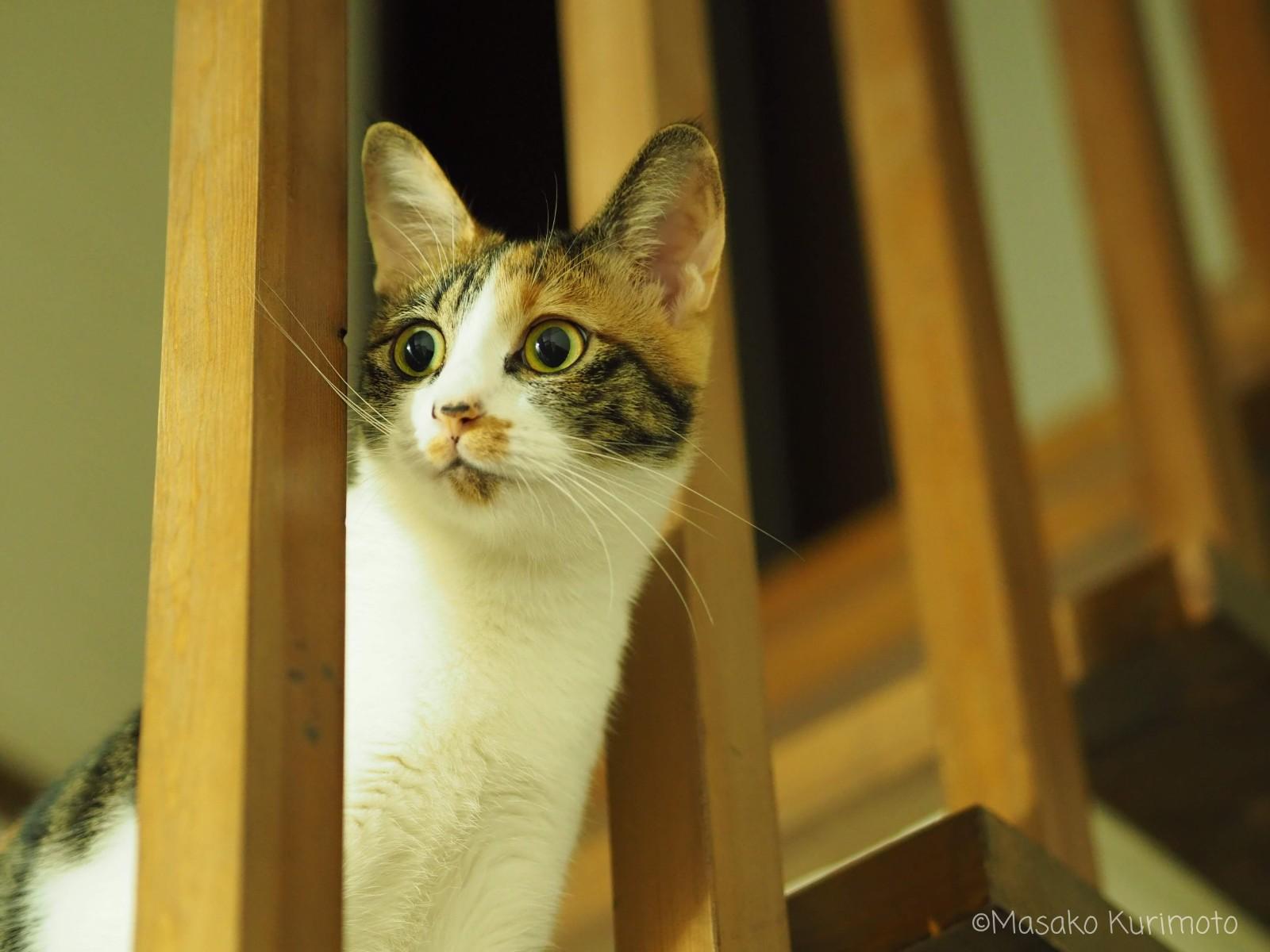 遠くを眺める猫
