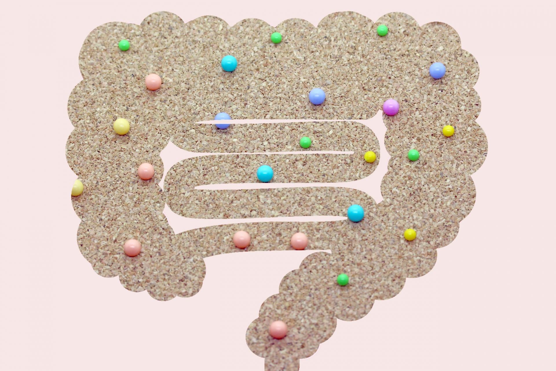 腸内細菌の多様性