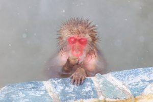 熱い風呂に浸かる猿