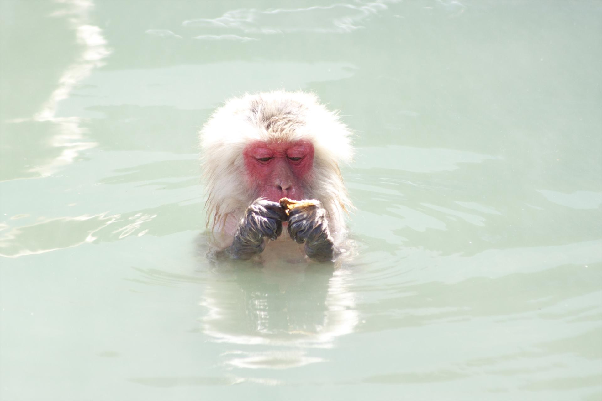 入浴する猿