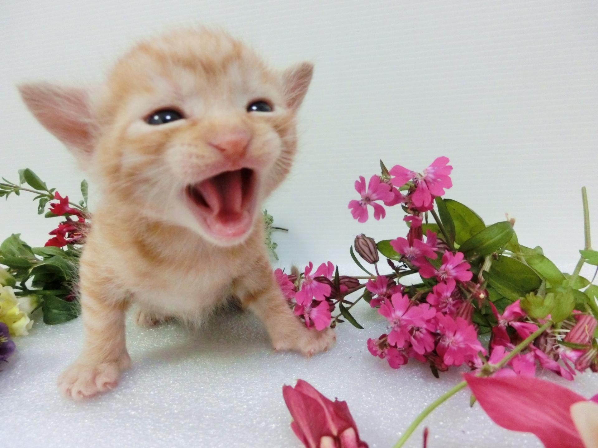 免疫をあげる笑顔の猫