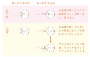 水晶体の仕組み