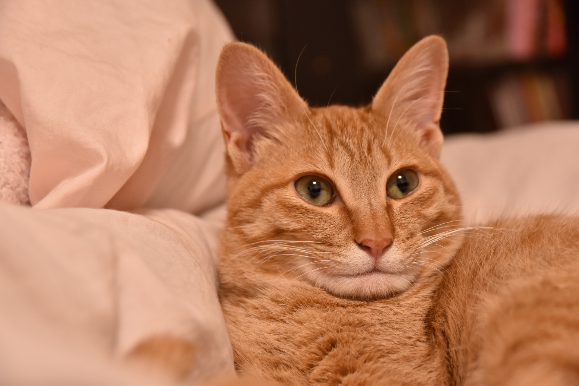 作り笑顔の猫