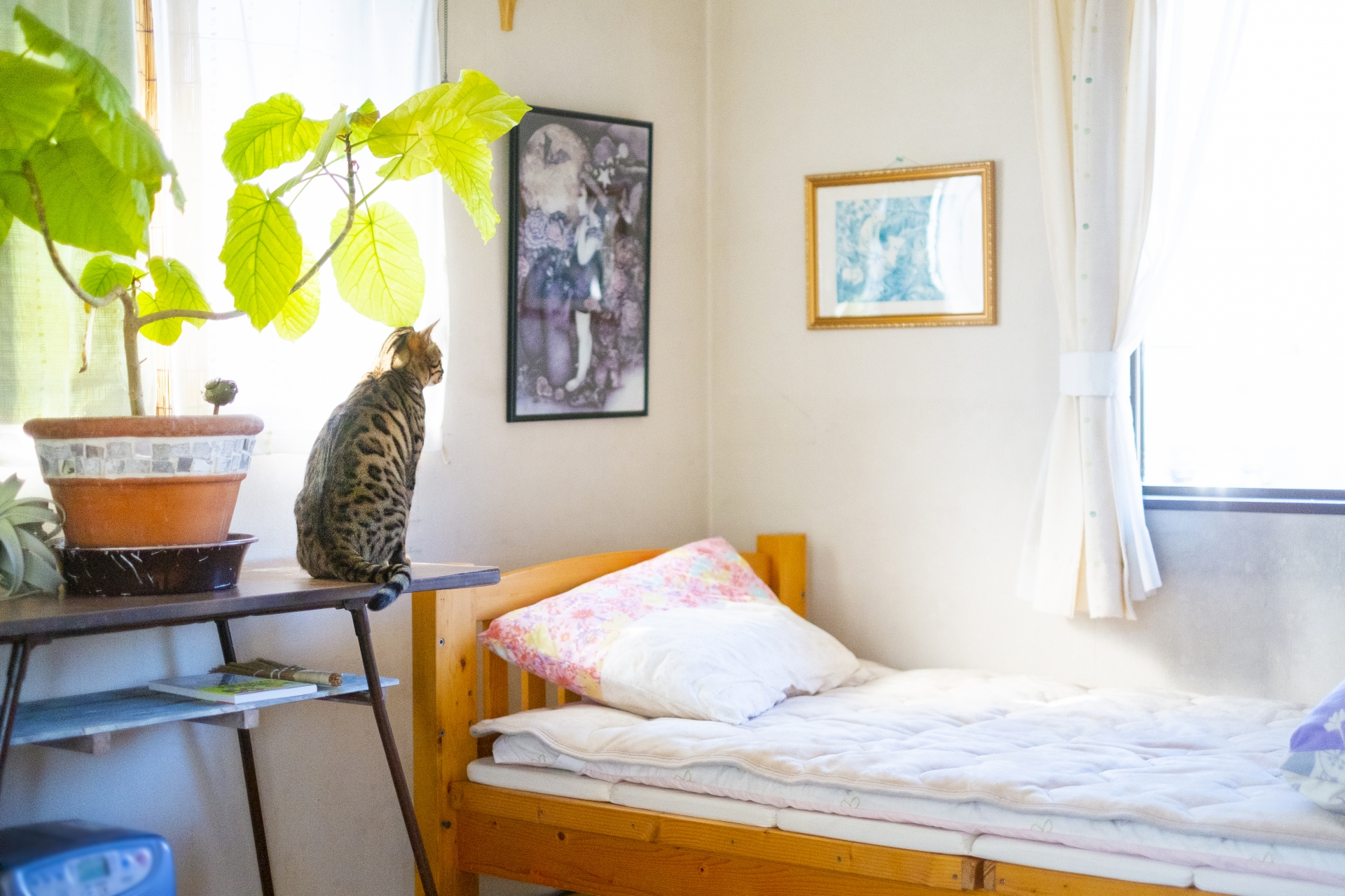 朝日の差し込むベッドルーム