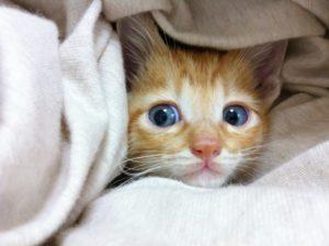 足を温める猫