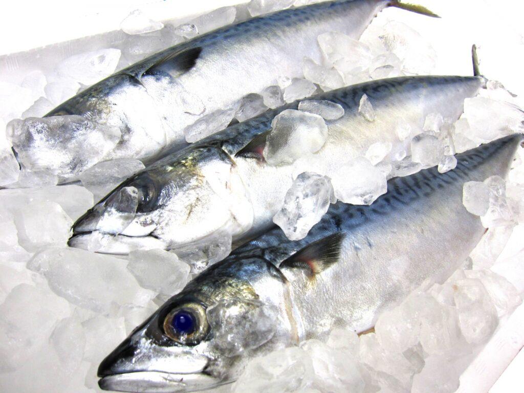 タンパク質の摂取に青魚の鯖