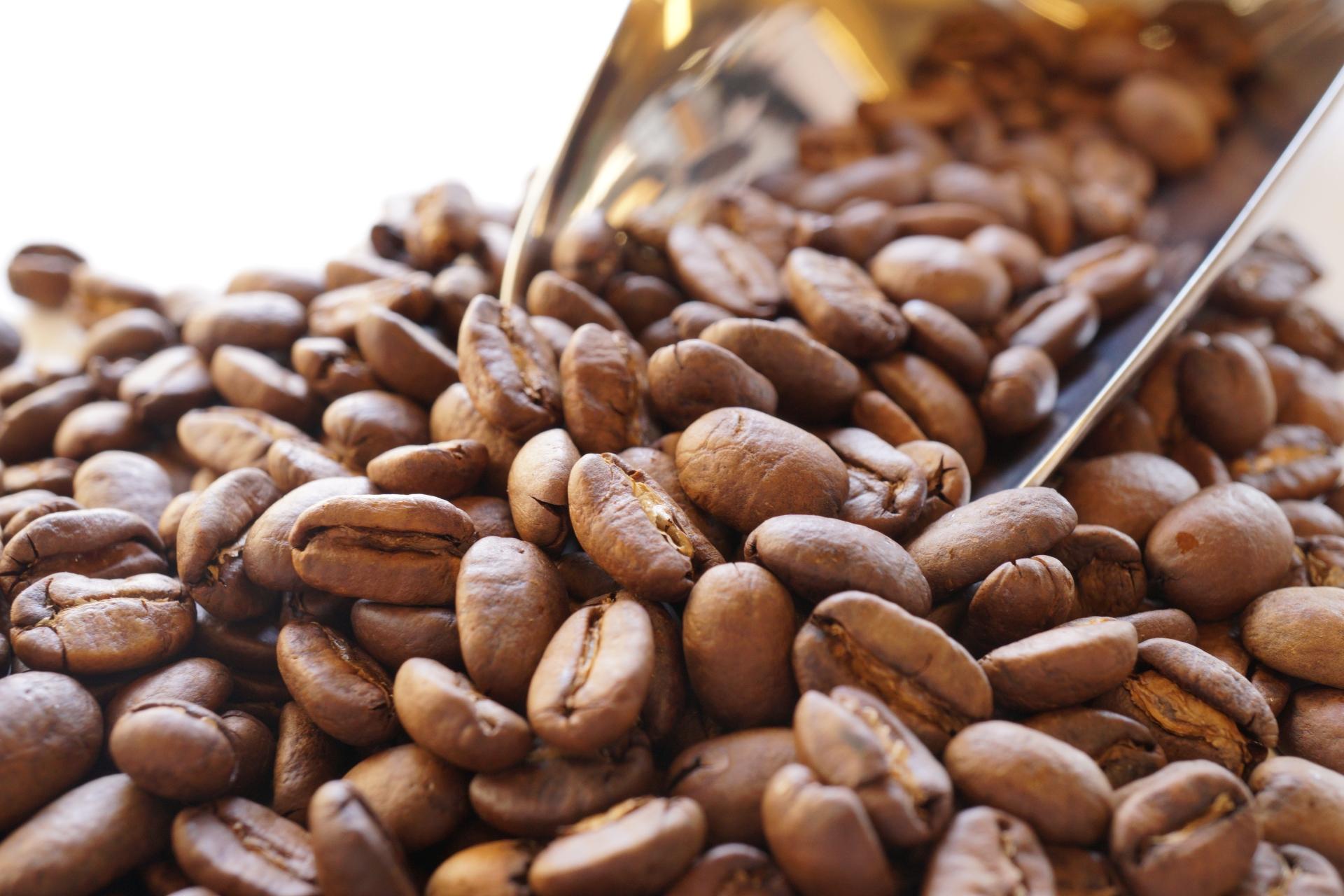 コーヒーの科学 カビ毒