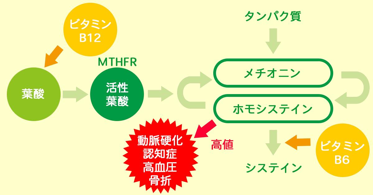 メチオニン回路