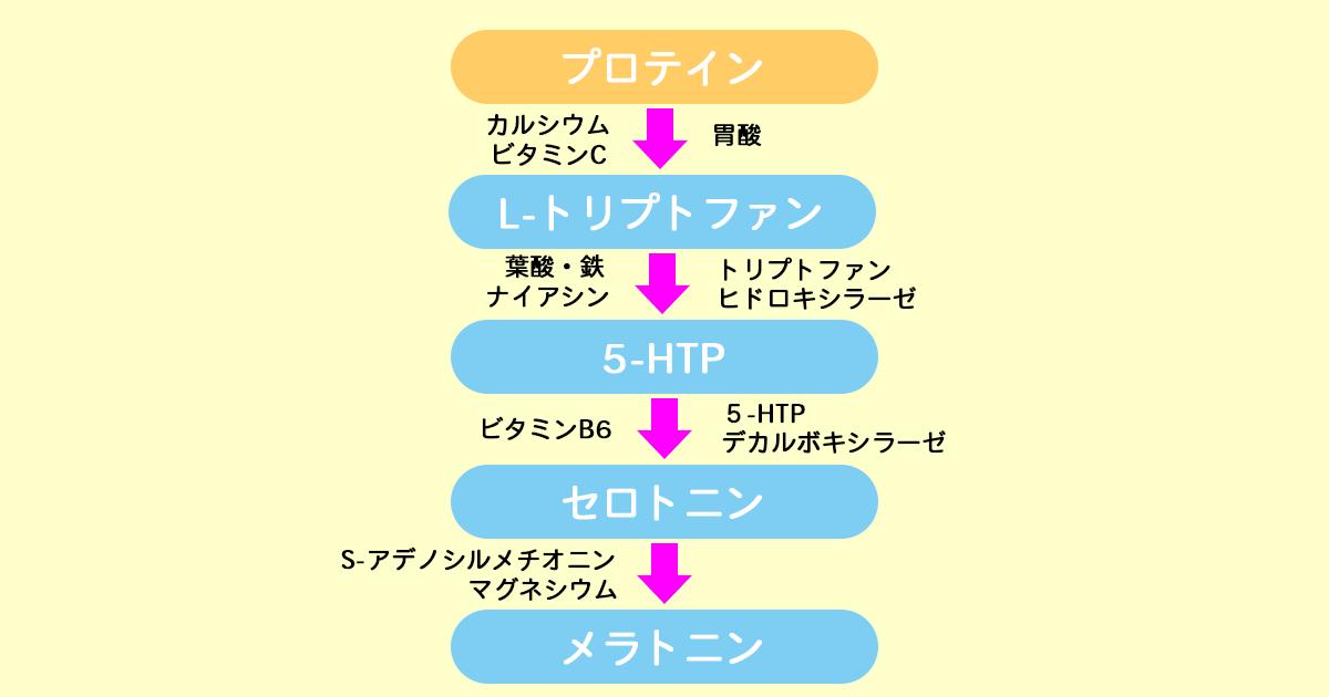 セロトニンの合成過程