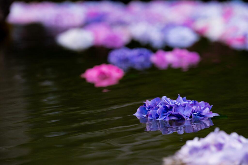流れ 川に浮かぶ花
